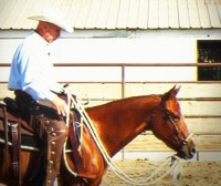 Good horse being trained with a hackamore