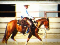 how to get your horse to trot using clicker training