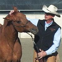 Horse training to fix head shy horses