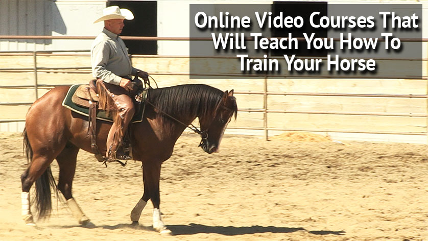 Online video courses that will teach you how to train your horse